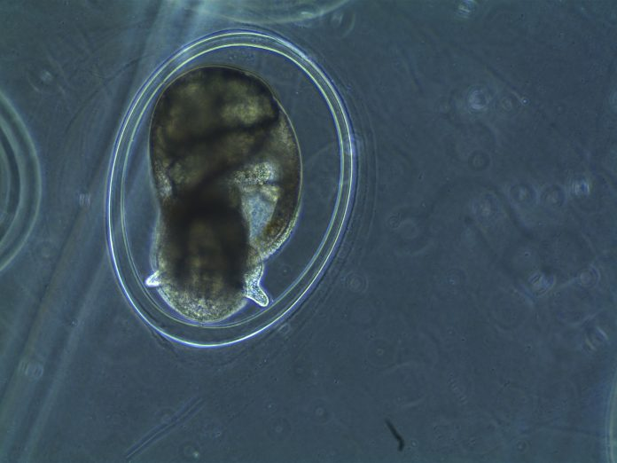 Scientists Created a New Video Tool for Studying Embryos