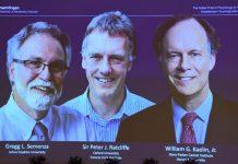 How our cells sense oxygen wins Nobel prize